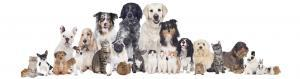 Dierenarts | Bata4en uw dierenarts | Haaften en Ophemert