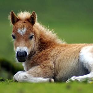 Paarden en pony's | Bata4en uw dierenarts | Haaften en Ophemert